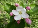 floare_2