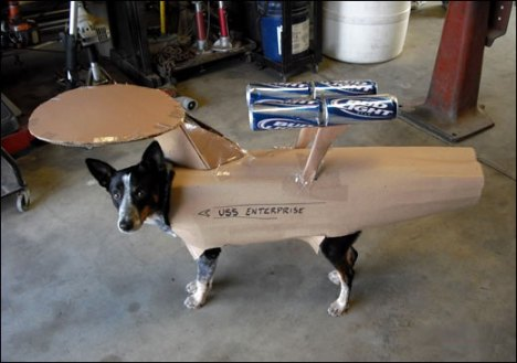 enterprisedog