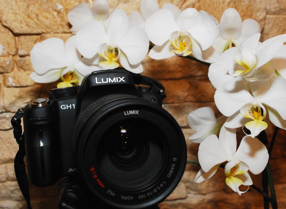 panasoni_gh1_foto_orhidee_2