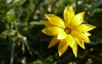 panasonic_gf1_ex_foto_macro_floare