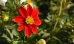panasonic_gf1_ex_foto_macro_floare_rosie